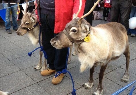 Two reindeers on the Southend Christmas Parade